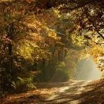 A natureza e Deus