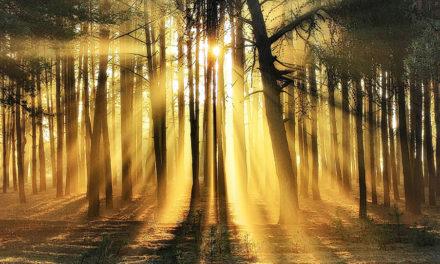 O simbolismo da árvore da vida, dos anjos e da espada no jardim do Éden