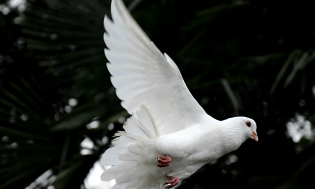 Como me tornar mais sensível aos sussuros do Espírito Santo