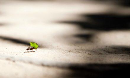 Sua saúde espiritual depende de coisas pequenas e simples