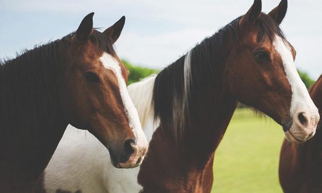 Por que cavalos são mencionados no Livro de Mórmon?