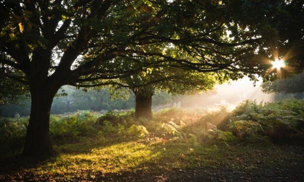 Como o irmão de Jesus Cristo levou Joseph Smith ao Bosque Sagrado